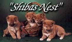 These beautiful puppies are from Shiba's Nest.